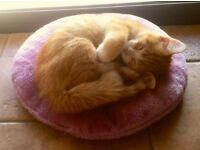 Two 11 Months Old Cat / Kittens for Sale - New Home