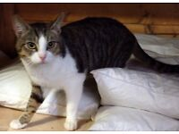 Could Olly be your new cat?