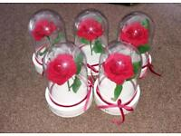 Plastic rose domes