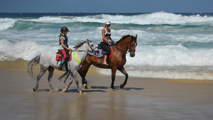 School master Irish Sports Horse for Sale Worongary Gold Coast City Preview