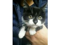 ***KITTENS READY TODAY***