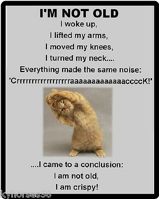 Funny Cat Humor I'm Not Old Refrigerator Magnet