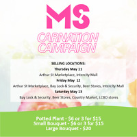 Volunteers to Sell Carnations for Multiple Sclerosis