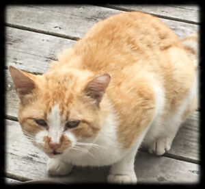 Do you know this cat??