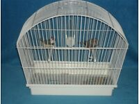 Two exhibition zebra finches with free cage
