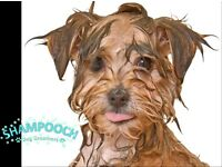 Shampooch Dog Groomers - York - Appointments Available