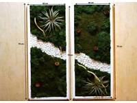 Natural pictures of reindeer moss and aerial plants with frame
