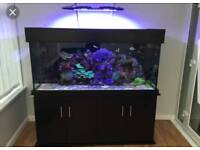 Clearseal Marine tropical fish tank 5ft x2ft x2ft and 4ft sump