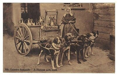 BELGIUM 1910 POST CARD DOG DRIVEN MILK CART FLEMISH MILK MAID UNUSED RARE