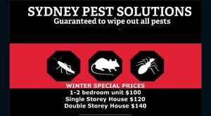 TERMITE RODENT PEST MICE RATS COCKROACH TREATMENT East Ryde Ryde Area Preview