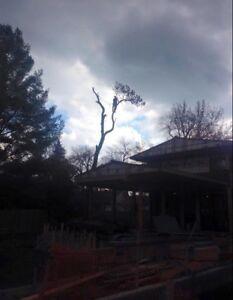 Abattage et émondage d'arbre Alexandre Cool