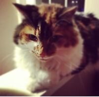 Need to rehome my Cat Tigger