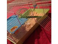 2 8 week old Russian dwarf hamsters with cage and accessories included
