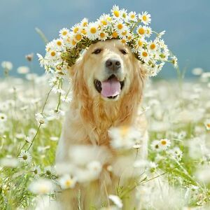 Pet Services Brantford - Boho Meadows