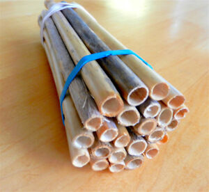 PHRAGMITES  reed grass tubes for MASON BEE culture