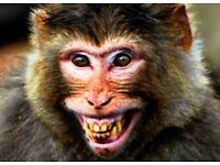 Day trip to Monkey World