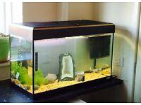 125 litre aquarium fish tank £80