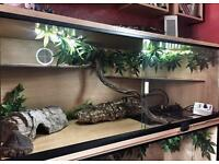 4 foot Vivarium, plus complete set up