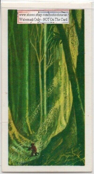 Henry Walter Bates English Amazon Naturalist Explorer  Vintage Ad Trade  Card