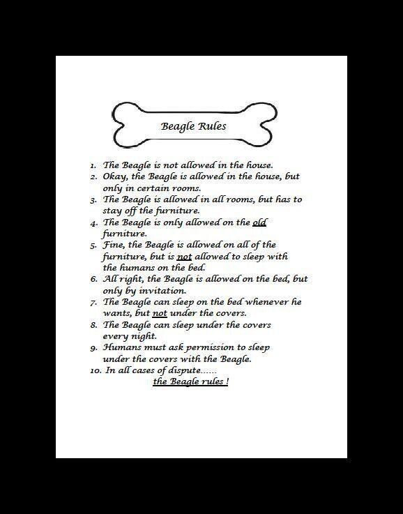 "Beagle ""Rules"" Dog Art Print - Matted"