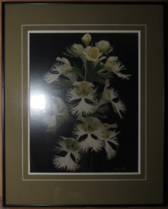 Fine Art Print Prairie Wildflower Western Can Fringed Orchid 11""
