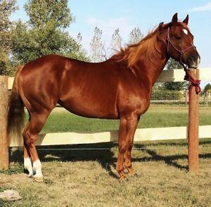 Horse training - barrels/miles