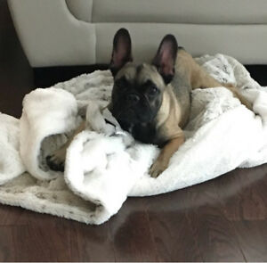 Adopt Local Dogs & Puppies in Ontario   Pets   Kijiji ...