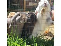 Beautiful Rabbits need forever home