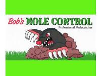 Mole catcher serving Ipswich and suffolk holding the certification of master mole catcher.