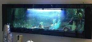 Fish tank wall hung Horsley Wollongong Area Preview