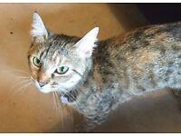 Lost Cat Found in Hulme