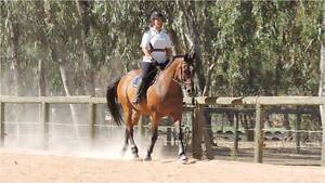 Stunning All Rounder Darling Downs Serpentine Area Preview