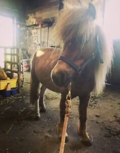 Mini mare available for ADOPTION