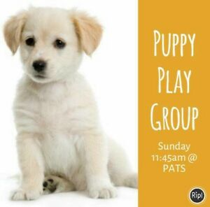Puppy Play Group Wanneroo Wanneroo Area Preview