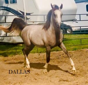 Yearlings and 2 Year Olds for Sale