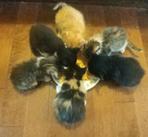 Kittens good to go May 28th!