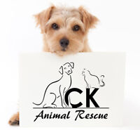 Love Animals?  Become a Volunteer for our Rescue!