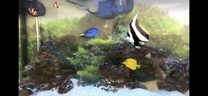 Saltwater aquarium (( Fish Tank ))