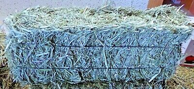 Dakota Hay Orchard Grass Hay   for RABBITS, GUINEA PIGS & CHINCHILLAS & OTHERS