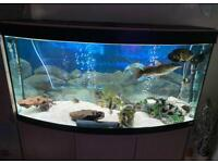 Fish tank with lots of accessories