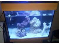 Juwel lido 120 litre fully setup marine saltwater fish tank + fish, light, powerhead, live rock etc