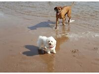 Canine Comforts Home Boarding - Holiday Home For Dogs!