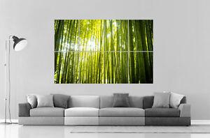 bambou zen nature poster grand format a0 large print ebay. Black Bedroom Furniture Sets. Home Design Ideas