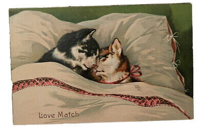 Antique Postcard Cats Love Match Valentine's Day❤️ Post Marked 1908