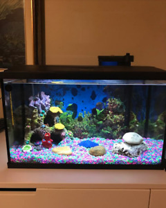 10 Gallon Fish tank with accessories