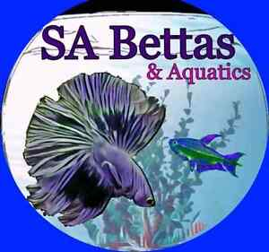 Catfish,Corys,Plants,Goldfish,Bettas and Loads More Adelaide CBD Adelaide City Preview