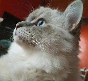 Lost my beloved cat Mufussa