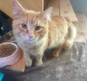 Male cat available rehoming