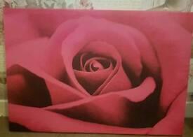 Medium sized pink rose canvas