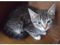 3 kittens left